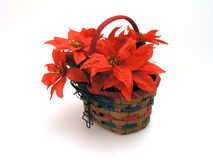Christmas Basket. Red Poinsietta christmas basket against white background Stock Photo
