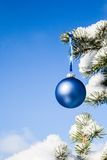 Christmas bauble on a pine tree Royalty Free Stock Photos