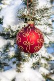 Christmas bauble on a pine tree Stock Images
