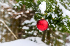 Christmas Bauble on a Snowy Tree Royalty Free Stock Image