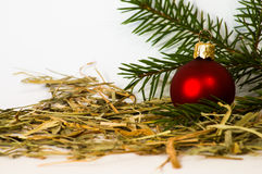 Christmas Bauble with young Spruce tree branch Royalty Free Stock Photos