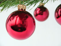 Christmas baubles. Shiny red Christmas baubles hanging from tree, isolated on white background stock images