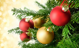 Christmas baubles on lush fir branches Stock Image