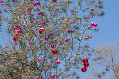 Christmas baubles with snow in tree Stock Images