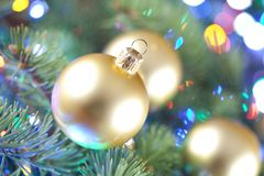 Christmas baubles on spruce tree stock photo