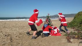 Christmas at the beach. Kids and dog in red Santa hats and shirts running near tree in the sand on sunny day. Video HD slow motion stock video footage