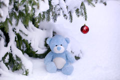 Christmas Bear. Image of a bear, sitting under a tree in the snow Royalty Free Stock Photo