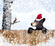 Christmas bear and cardinal Royalty Free Stock Image