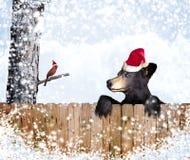 Christmas bear and cardinal royalty free stock image
