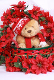 Christmas bear and poinsetta Royalty Free Stock Images