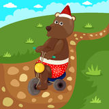 Christmas bear riding bicycle Stock Images