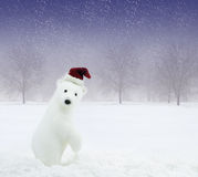 Christmas bear in snowy field. White bear with Santa Claus hat in snowy field royalty free stock image