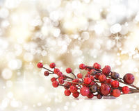 Christmas Berries Royalty Free Stock Images