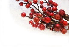 Christmas berries Royalty Free Stock Photo