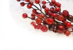 Christmas berries Royalty Free Stock Photo