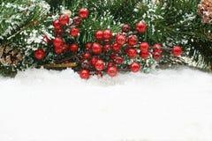 Christmas berries Royalty Free Stock Photos