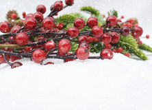 Christmas berries in snow Royalty Free Stock Photo