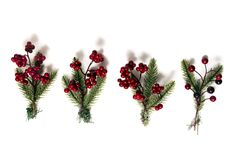 Christmas berry branches. Different Christmas berry branches isolated on a white background royalty free stock image
