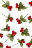 Christmas berry branches. Different Christmas berry branches isolated on a white background stock photo