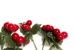 Christmas berry branches. Different Christmas berry branches isolated on a white background royalty free stock photos