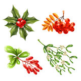 Christmas Berry Branches Set Royalty Free Stock Photos