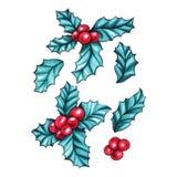 Christmas berry holly or ilex set. Christmas berry holly or ilex. Red xmas fruit. Winter aquifolium leaves decor. Christmas berry traditional symbols set stock illustration