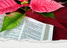 Christmas Bible Royalty Free Stock Photo