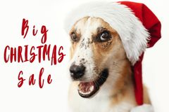 Christmas big sale text. Holiday discount offer. Cute dog in san royalty free stock photos