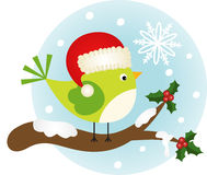 Christmas bird on holly branch Royalty Free Stock Photography