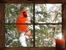 Christmas bird. Stock Image