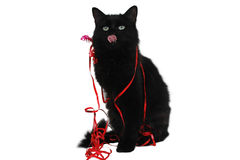 Christmas Black Cat Gift 2 Royalty Free Stock Photography