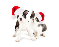 Christmas Black and White Puppy and Kitten Royalty Free Stock Photo