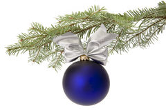 Christmas blue bauble on tree branch. Christmas blue bauble with ornamental ribbon (bow) hanging on Common Fir (Abies alba) twig on white background Stock Photo