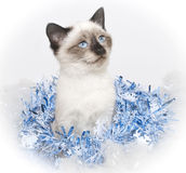 Christmas Blues Stock Photography