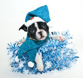 CHristmas Blues Stock Photos