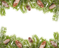 Christmas Border. Christmas tree branches and fir cones border covered in snow Royalty Free Stock Photography