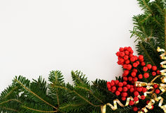 Christmas border. A decorative border/frame composed of vibrant berries, coniferous foliage and curled gold ribbon isolated on a white background. Suitable for Royalty Free Stock Images
