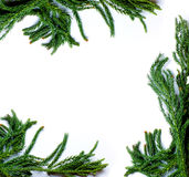 Christmas border frame of fir tree branch on white background isolated Stock Photo