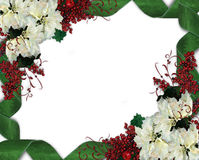 Christmas Border Frame Flowers. Christmas design with white poinsettias and green damask ribbons for greeting card, invitation or background. Image and vector illustration