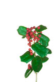 Christmas Border of holly on white Royalty Free Stock Photo