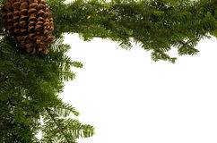 Christmas border with large pine cone. Christmas border of fresh greens and a large pine cone Royalty Free Stock Images