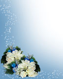 Christmas Border White Poinsettias Stock Photo