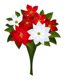 Christmas bouquet of red and white poinsettias. vector illustration