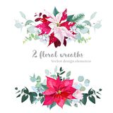 Christmas Bouquets Arranged From Red And Marbled Poinsettia Stock Photo