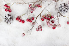Christmas branch with berries Royalty Free Stock Images