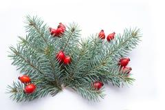 Christmas branch Stock Image