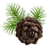 Christmas branch hanging pine cone. Christmas tree branch hanging pine cone on white background Royalty Free Stock Photography