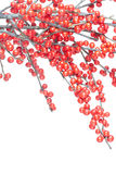 Christmas branch with red berries Royalty Free Stock Photos