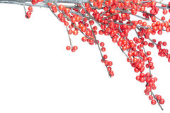 Christmas branch with red berries Royalty Free Stock Images