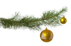 Christmas branch with two golden baubles Royalty Free Stock Images